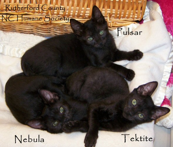 Adoptable Personal Panthers